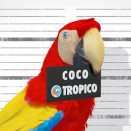 citation culte de coco-tropico -
